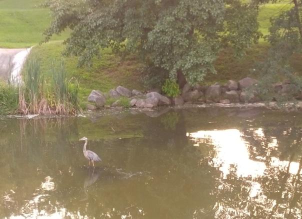 2013-08-19 19.30.27-bird
