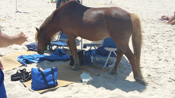 One hazard - the horse walking up and down the beach trying to open coolers.